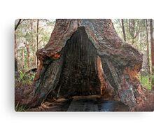 Old Tingle Tree base Metal Print
