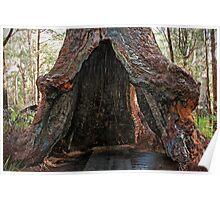 Old Tingle Tree base Poster