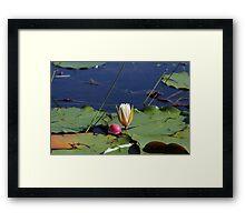 A Lily and Bobber Framed Print
