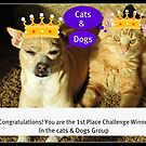 Congratulations Cats & Dogs Challenge Group by Angie O'Connor