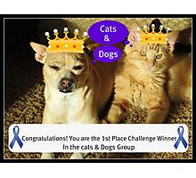 Congratulations Cats & Dogs Challenge Group Photographic Print