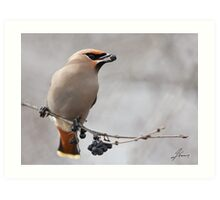 Berry Profile of a Waxwing Art Print