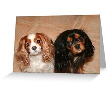 Brother and Sister ~ Cavaliers King Spaniels Greeting Card