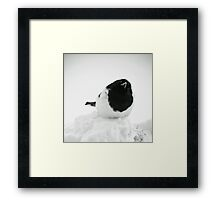 Whodat?---Magpie In Snow Framed Print