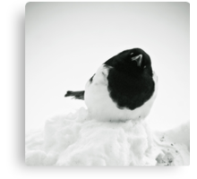 Whodat?---Magpie In Snow Canvas Print