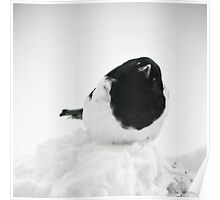 Whodat?---Magpie In Snow Poster