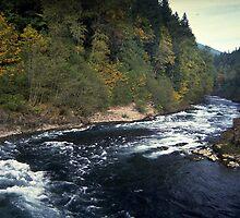 North Santiam River, Niagara, Oregon by Dave Anderson