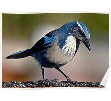 ...WINTER BIRD SERIES Poster