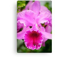 PInk Cattleya Orchid Canvas Print