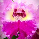 Bi-Color Cattleya Orchid by Oscar Gutierrez