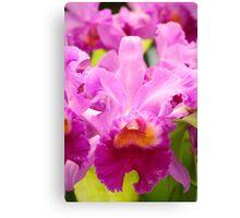 Pink Cattleya Orchids Canvas Print