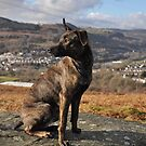 Mountain Dog Roxi by rhian mountjoy