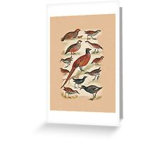 Pheasant and more Greeting Card