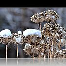 Winter Garden by smalletphotos