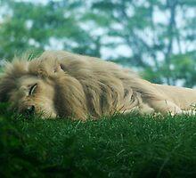 The King Sleeps by Jenn Hawk