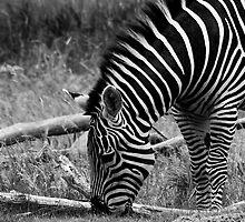 Stripes by Jenn Hawk