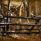 jack fence: Where's Waldeer? by kayzsqrlz