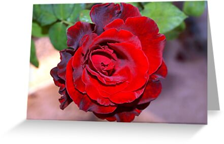 Climbing red rose by ♥⊱ B. Randi Bailey
