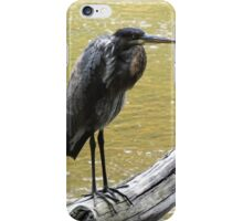 The Hunchback Bird iPhone Case/Skin