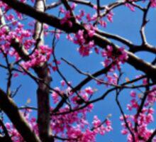 Redbud Tree Blossoms in Spring Sticker