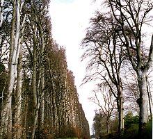 World's Tallest & Longest Hedge. by Margaret  Hyde