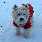Westie Winterwonderland by MarianBendeth