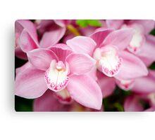 Pink Cymbidium Orchid Canvas Print