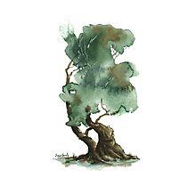 Little Tree 116 Photographic Print