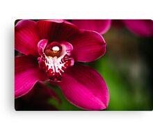 Red Cymbidium Orchid Canvas Print