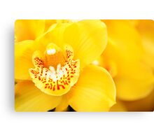 Yellow Cymbidium Orchid Canvas Print