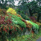 Autumn Colours by MacsfieldImages