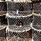 Lobster Pots by Chris75