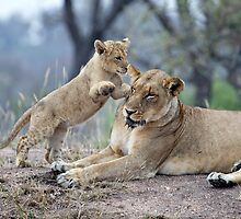Mom, Please Play ! by Michael  Moss