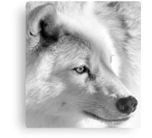 Eye of the Wolf Metal Print