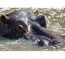 Hippo  Photographic Print