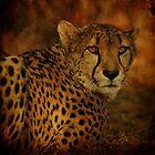 Cheetah by Sandy Keeton