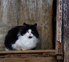 Orphaned - Barn Cat by Tony Wilder