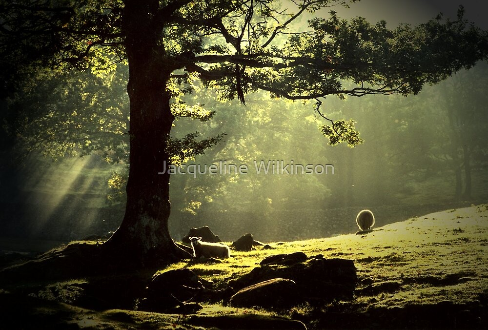 Early Morning Borrowdale In The English Lakedistrict by Jacqueline Wilkinson