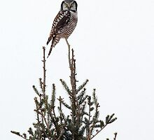 Nature's Christmas Tree Topper ;) by Bill McMullen