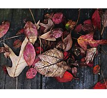 Collage Of Autumn Red Photographic Print