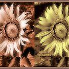 Sunny Flowers by AlexMac