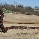Caterpillar in Stamford, Texas by Susan Russell
