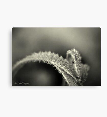 Black Frost Canvas Print