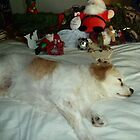Toby With The Christmas Decorations. by joycee