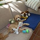 Buddy Guarding His Toys by joycee