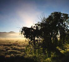 Sunrise along the road in Citrusdal by fortheloveofit