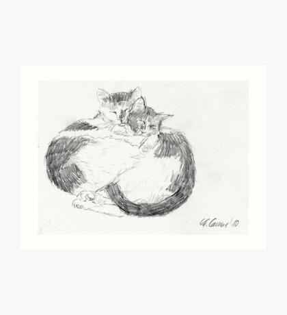 Sleeping cats 1 Art Print
