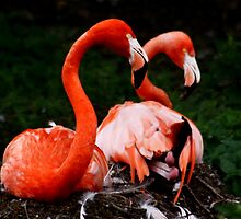 Pretty Flamingo by AnnDixon