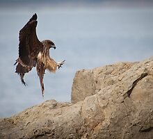 The Eagle is Landing by GVarney