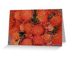 Red Proteus Flowers, Santa Barbara market Greeting Card